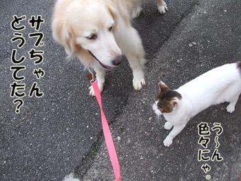 2011_07290059.jpg
