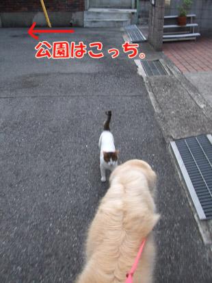 2011_08030029.jpg