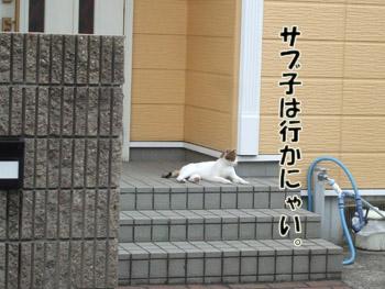 2011_08030131.jpg