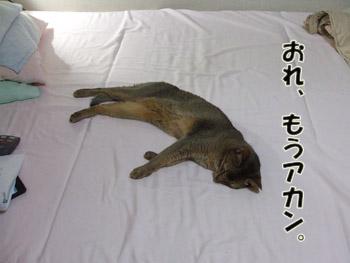2011_08070027.jpg