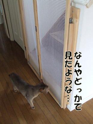 2011_08070051.jpg