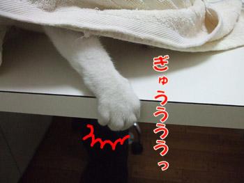 2011_08070056.jpg