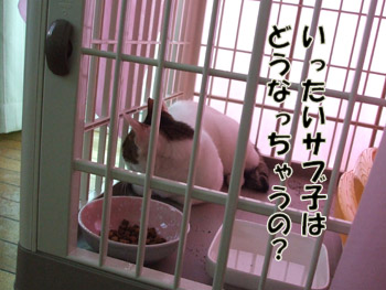 2011_08070065.jpg
