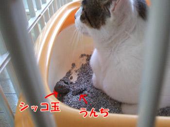 2011_08100018.jpg