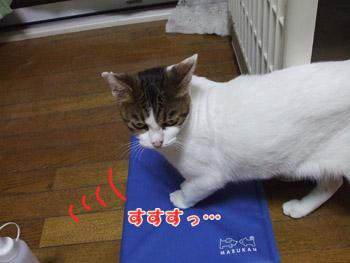 2011_08130066.jpg
