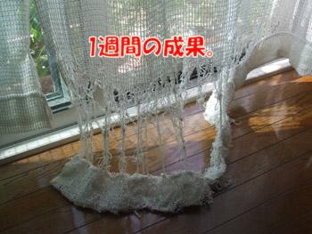 2011_08130095.jpg