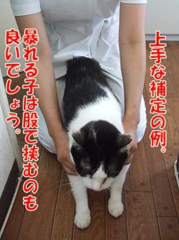 2011_08130100.jpg