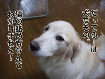 2011_08300021_20110908230400.jpg
