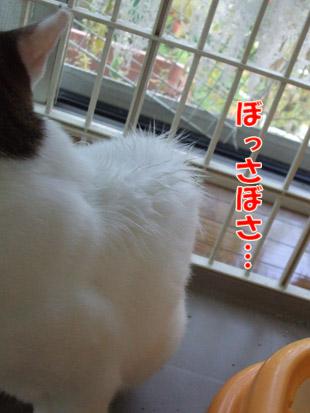 2011_08300031.jpg