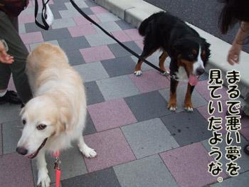 2011_09100032.jpg
