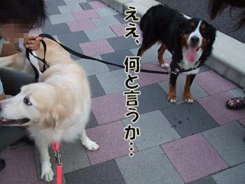 2011_09100033.jpg