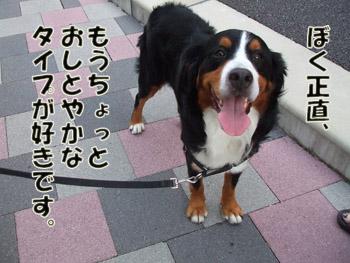 2011_09100035.jpg