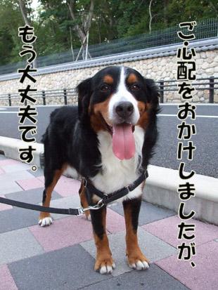 2011_09100037.jpg