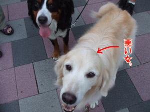 2011_09100058.jpg