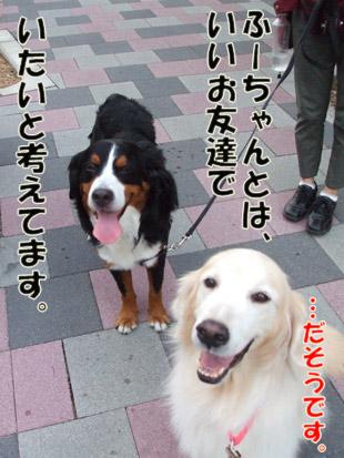 2011_09100059a.jpg
