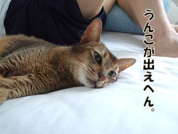 2011_09110013.jpg