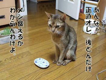 2011_09110015.jpg