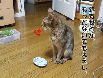 2011_09110017.jpg
