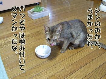 2011_09110033.jpg