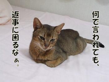 2011_09110036.jpg