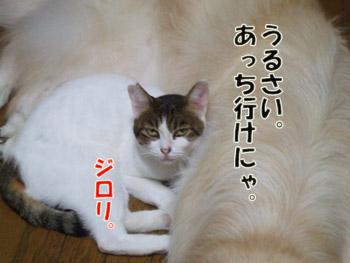 2011_09200005a.jpg