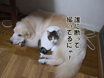 2011_09200020.jpg