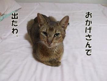 2011_09200041.jpg