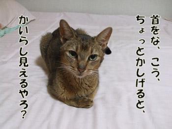 2011_09200043.jpg