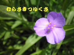 ばら 099-1統合