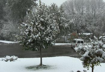 snow101209.jpg