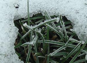 snow1013091.jpg