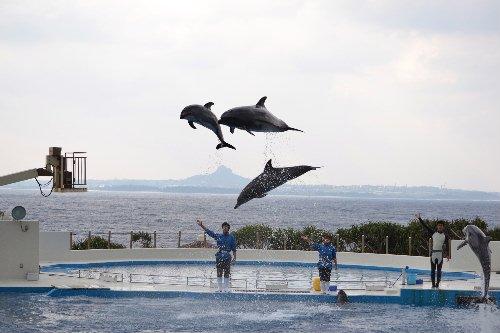 2011.03.04沖縄②15