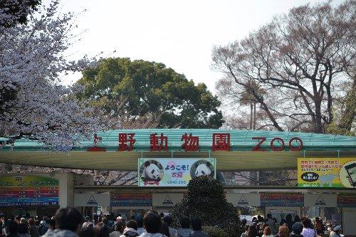 04.02桜01