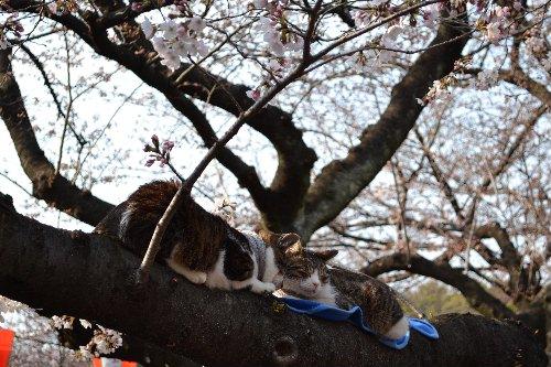 04.02桜07