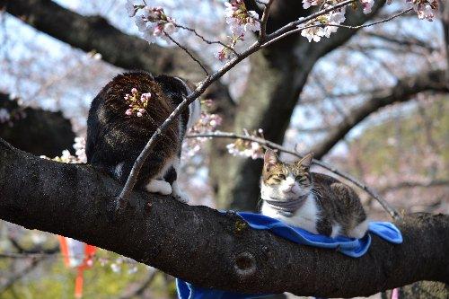 04.02桜09