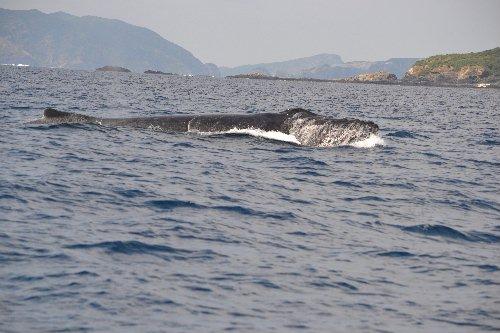 2011.03.05沖縄③07