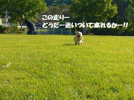 s-P1020506.jpg