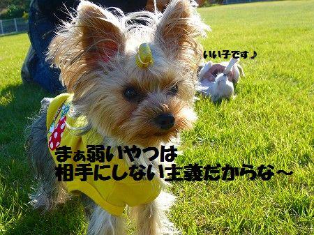 s-P1020518.jpg