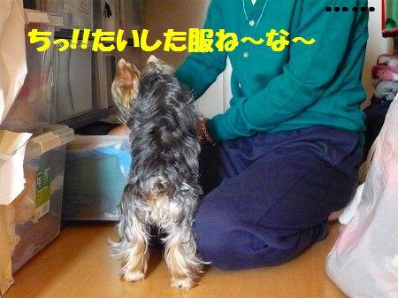 s-P1020571.jpg