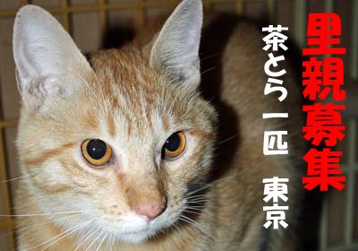 chatokun.jpg
