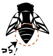 nottanishi2.jpg