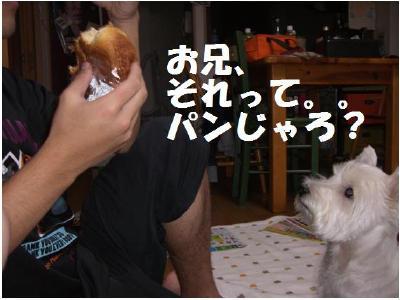 パンくれ1