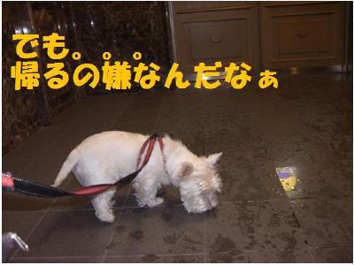 雨天の散歩3