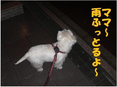 雨天の散歩1