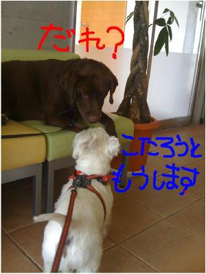 友好的な犬たち