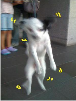 二足歩行犬