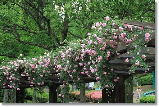 花フェスタ記念公園 5