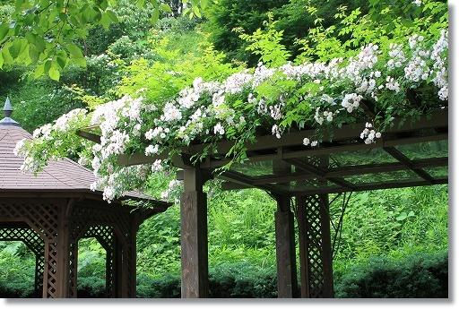 花フェスタ記念公園 6