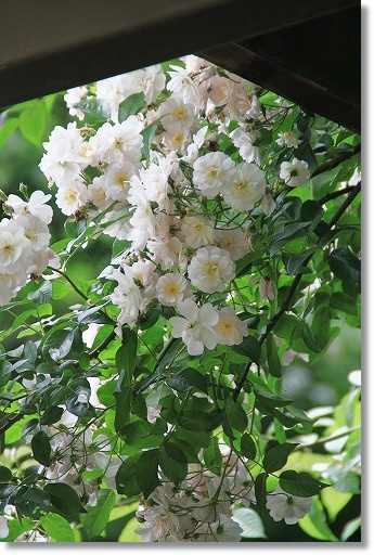 花フェスタ記念公園 7