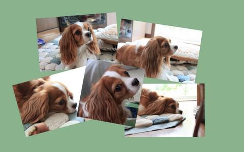 2010-08-22, Coco